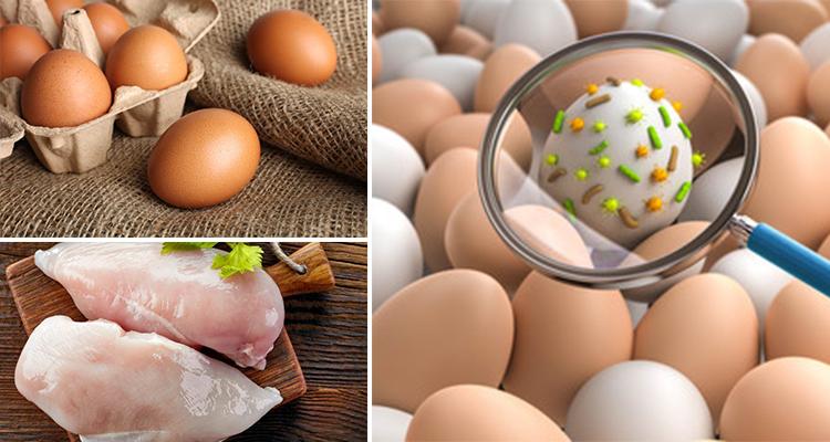 احذر بكتيريا  السالمونيلا الموجودة في البيض والدجاج .. طرق الوقاية !