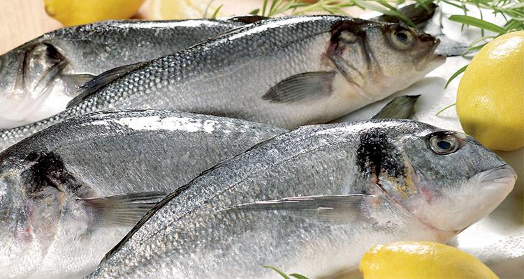 كيف نتأكد من أن السمك طازج وصالح للأكل ؟