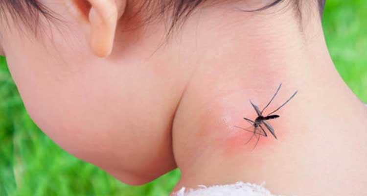 https://cuisine.nessma.tv/Quel remède naturel anti moustique