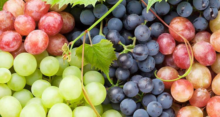 https://cuisine.nessma.tv/فوائد مذهلة للعنب، يمنع الجلطات ويعالج الصداع النصفى...