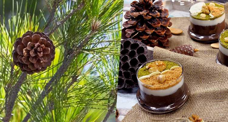 https://cuisine.nessma.tv/فوائد لا تحصى في تناول الصنوبر الحلبي  (الزقوقو).. تعرف على أهمها !
