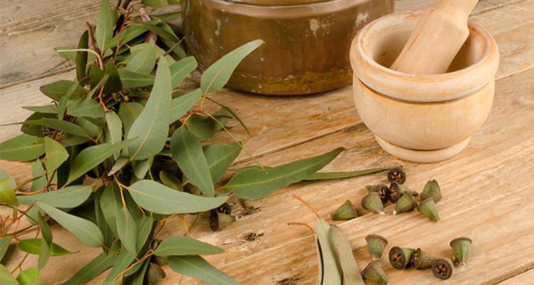 Bienfaits de l'eucalyptus pour la santé