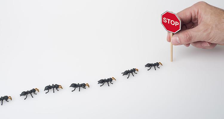 طرق طبيعية فعالة للتخلص من النمل في المنزل