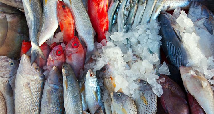 https://cuisine.nessma.tv/فقط بصفاقس: تقسيم أنواع الأسماك حسب الفصول
