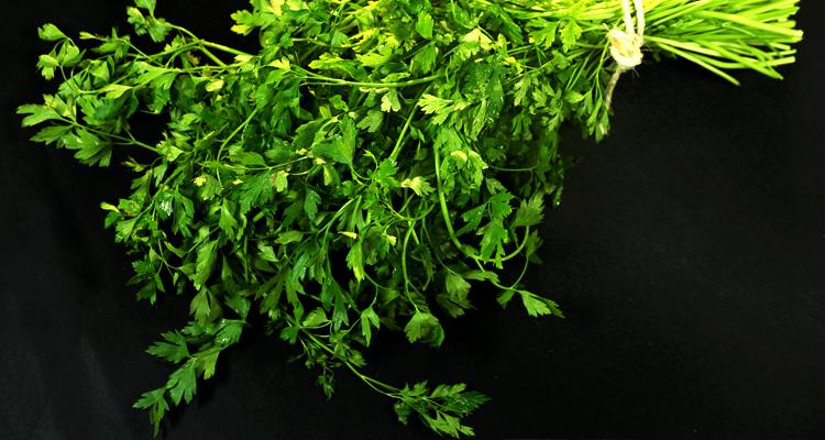 https://cuisine.nessma.tv/Comment conserver les herbes aromatiques : persil, coriandre… ?