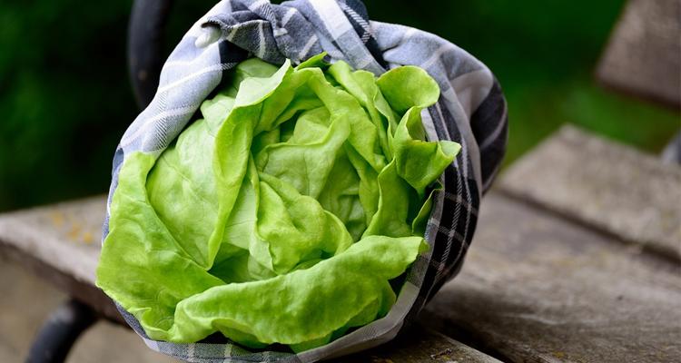 https://cuisine.nessma.tv/Comment conserver la salade ?
