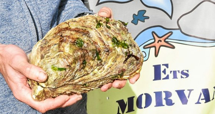 https://cuisine.nessma.tv/Une huître exceptionnelle de 2,2 kg découverte en Bretagne