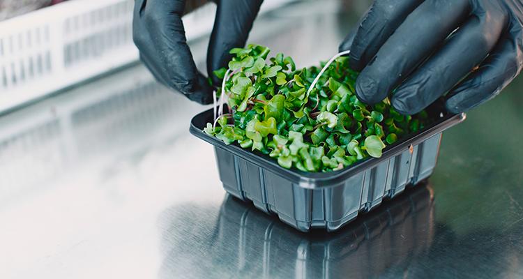10 légumes à faire repousser à la maison