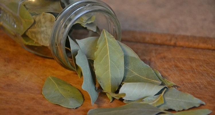 Brûler des feuilles de laurier pour un effet thérapeutique